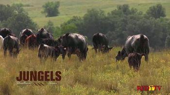Jungels Shorthorn Farm TV Spot, '2021 Durhams in the Dakotas Sale' - Thumbnail 3