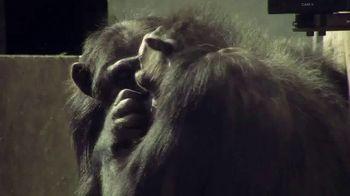 Disney+ TV Spot, 'Meet the Chimps' - Thumbnail 3