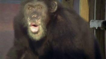 Disney+ TV Spot, 'Meet the Chimps' - Thumbnail 4