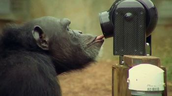 Disney+ TV Spot, 'Meet the Chimps' - Thumbnail 6