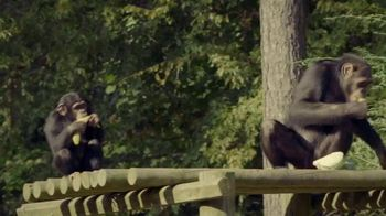 Disney+ TV Spot, 'Meet the Chimps' - Thumbnail 7