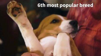 American Kennel Club TV Spot, 'Beagle: Sixth Most Popular Dog Breed' - Thumbnail 6