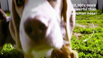 American Kennel Club TV Spot, 'Beagle: Sixth Most Popular Dog Breed' - Thumbnail 7