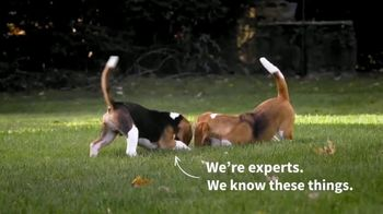 American Kennel Club TV Spot, 'Beagle: Sixth Most Popular Dog Breed' - Thumbnail 8