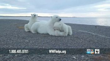 World Wildlife Fund TV Spot, 'Polar Bears: Calender' Song by A Great Big World - 221 commercial airings
