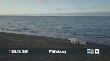 World Wildlife Fund TV Spot, 'Polar Bears: Calender' Song by A Great Big World - Thumbnail 4
