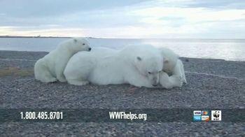 World Wildlife Fund TV Spot, 'Polar Bears: Calender' Song by A Great Big World - Thumbnail 6