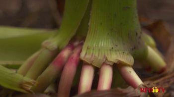 BASF TV Spot, 'Poncho Votivo 2.0: Plant Health' - Thumbnail 6