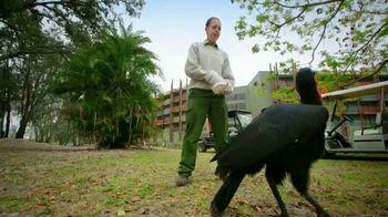 Disney+ TV Spot, 'Magic of Disney's Animal Kingdom' - 1420 commercial airings