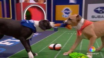 Discovery+ TV Spot, 'Puppy Bowl XVII' Featuring Snoop Dogg, Martha Stewart - Thumbnail 4