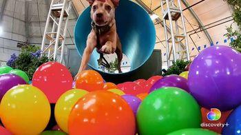 Discovery+ TV Spot, 'Puppy Bowl XVII' Featuring Snoop Dogg, Martha Stewart - Thumbnail 7