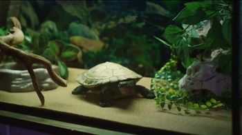 Discover Card TV Spot, 'That's My Turtle'