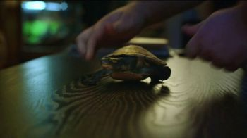 Discover Card TV Spot, 'That's My Turtle' - Thumbnail 3