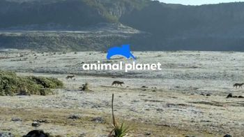 Discovery+ TV Spot, 'Animal Planet' - Thumbnail 1