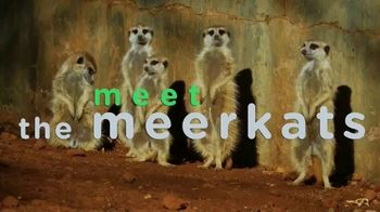 Discovery+ TV Spot, 'Animal Planet' - Thumbnail 7