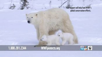 World Wildlife Fund TV Spot, 'Polar Bears: $12 a Month' Song by A Great Big World - Thumbnail 10