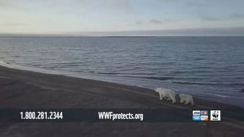 World Wildlife Fund TV Spot, 'Polar Bears: $12 a Month' Song by A Great Big World - Thumbnail 6