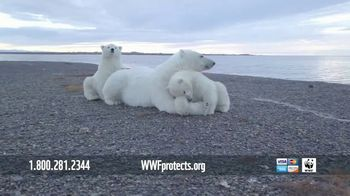 World Wildlife Fund TV Spot, 'Polar Bears: $12 a Month' Song by A Great Big World - Thumbnail 7