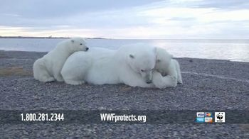 World Wildlife Fund TV Spot, 'Polar Bears: $12 a Month' Song by A Great Big World