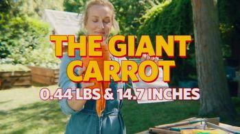Glad Flex'N Seal TV Spot, 'Giant Carrot'