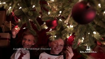 Balsam Hill Cyber Monday Sale TV Spot, 'This Tree: Up to 50% Off' - Thumbnail 7