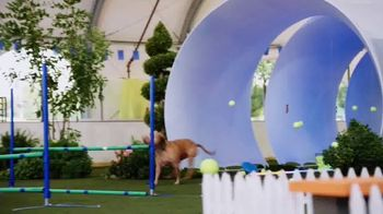 Discovery+ TV Spot, 'Puppy Bowl Presents: The Dog Games' - Thumbnail 3