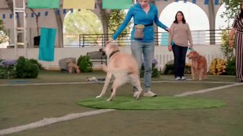 Discovery+ TV Spot, 'Puppy Bowl Presents: The Dog Games' - Thumbnail 6