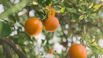 Simply Orange TV Spot, 'Basic Rule' - Thumbnail 2