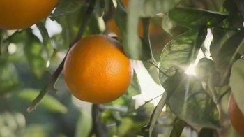 Simply Orange TV Spot, 'Basic Rule' - Thumbnail 3