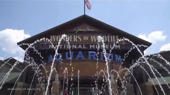 Missouri Division of Tourism TV Spot, 'Play It Safe: Wonders of Wildlife, History Museum' - Thumbnail 3