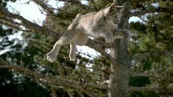 Blue Buffalo TV Spot, 'Lynx Hunger: Gift Card' - Thumbnail 2