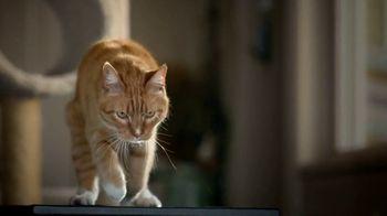 Blue Buffalo TV Spot, 'Lynx Hunger: Gift Card'