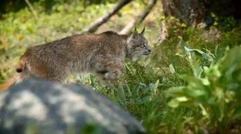 Blue Buffalo TV Spot, 'Lynx Hunger: Gift Card' - Thumbnail 4