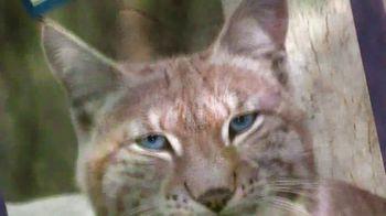 Blue Buffalo TV Spot, 'Lynx Hunger: Gift Card' - Thumbnail 5