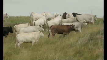 Piedmontese TV Spot, 'True Taste of Beef' - Thumbnail 3