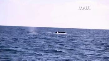 The Hawaiian Islands TV Spot, 'Whale Watching' Featuring Corey Conners, Max Homa - Thumbnail 3