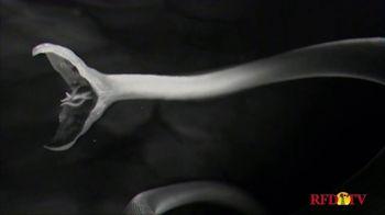 Safe-Guard TV Spot, 'Kill More Resistant Worms' - Thumbnail 4