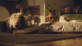 Chewy.com TV Spot, 'New Pet: All the Moments' - Thumbnail 6