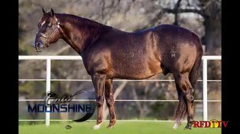 Shawnee Horse Sales TV Spot, '2020 Horse Sale' - Thumbnail 4
