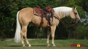 Shawnee Horse Sales TV Spot, '2020 Horse Sale' - Thumbnail 5
