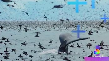 Discovery+ TV Spot, 'David Attenborough Collection' - Thumbnail 9
