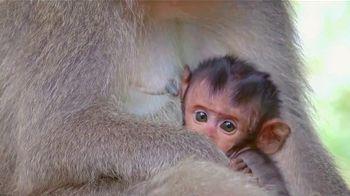 World Wildlife Fund TV Spot, 'Ámalo o piérdelo: Love Me Tender' canción de K.S. Rhoads [Spanish] - Thumbnail 3