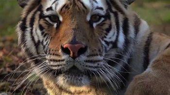World Wildlife Fund TV Spot, 'Ámalo o piérdelo: Love Me Tender' canción de K.S. Rhoads [Spanish] - Thumbnail 6