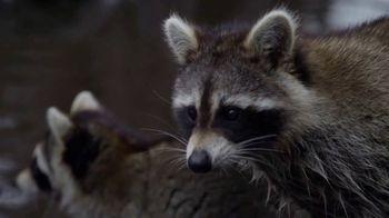 North American Trapper TV Spot, 'Raccoons'