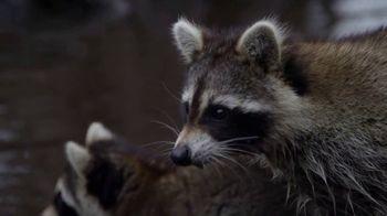 North American Trapper TV Spot, 'Raccoons' - Thumbnail 1