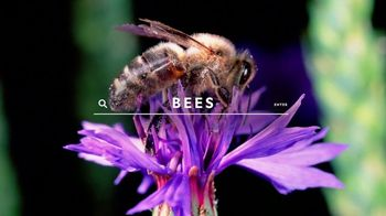 National Geographic Magazine TV Spot, 'Start Here: Bees' - Thumbnail 1