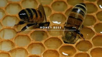 National Geographic Magazine TV Spot, 'Start Here: Bees' - Thumbnail 2