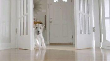 Purina Beggin' TV Spot, 'Bonkers for Beggin: Stairs' - Thumbnail 7