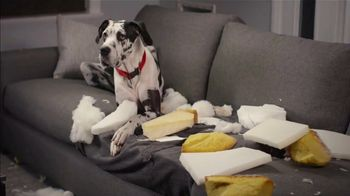 Isernio's Ground Chicken TV Spot, 'Your Dog Thinks the Couch Is a Chew Toy'