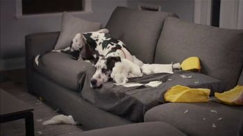 Isernio's Ground Chicken TV Spot, 'Your Dog Thinks the Couch Is a Chew Toy' - Thumbnail 3